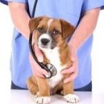 Zoom sur le métier de vétérinaire